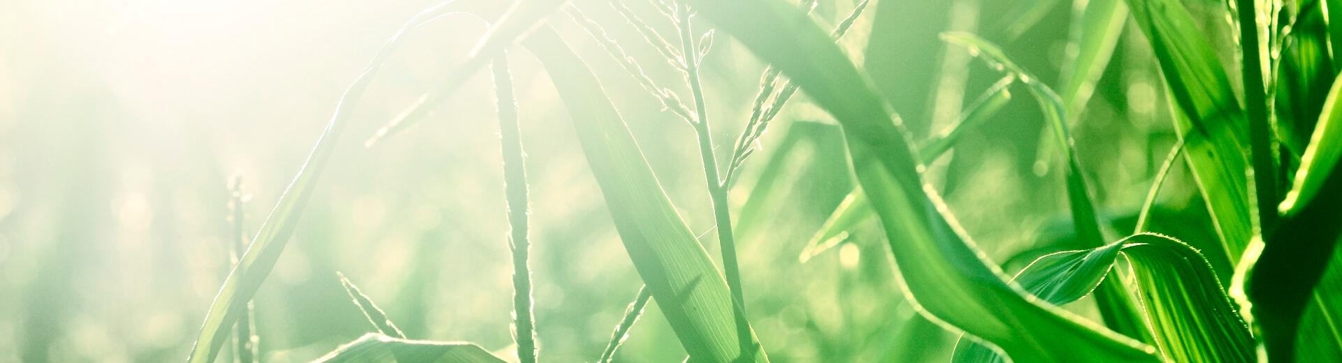 Hybride warmtepompen uitgelicht